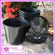 125mm-orchid-Squat-Pot-4