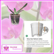 120mm-TEKU-CLEAR-phalaenopsis-orchid-pot-2