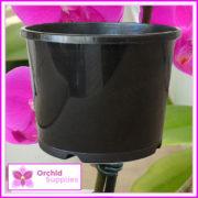 200mm-Orchid-Squat-Pot-3