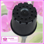 100mm-squat-orchid-pot-black-2