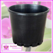 100mm-squat-orchid-pot-black-3