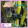 Butterfly Clip Orchid Flower Stem - for more info go to orchidsupplies.com.au