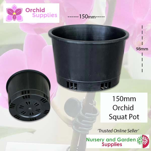 150mm squat orchid pot